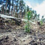 Możesz posadzić las. Przed nami akcja trzech nadleśnictw