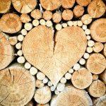 Drewno jest super! Rusza akcja Lasów Państowych